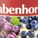 2Rabenhorst - Sok z borówek i winogron 300dpi
